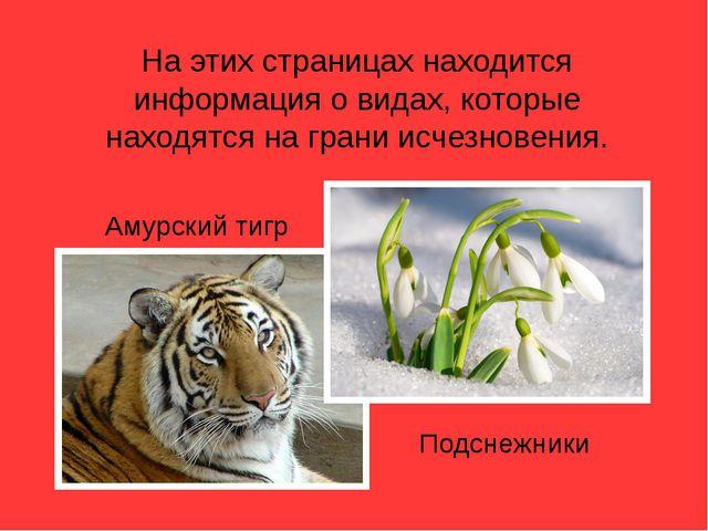 На этих страницах находится информация о видах, которые находятся на грани ис...