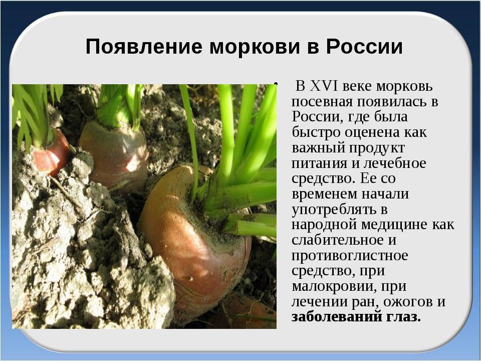 Появление моркови в России В ХVІ веке морковь посевная появилась в России, гд...