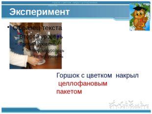 Эксперимент горшок с цветком накрыл целлофановым пакетом. Горшок с цветком на