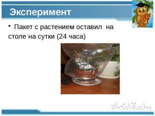 Эксперимент Пакет с растением оставил на столе на сутки (24 часа)