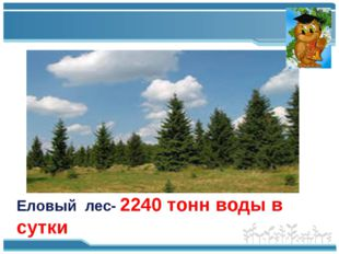 Еловый лес- 2240 тонн воды в сутки