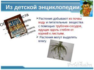 Из детской энциклопедии Растения добывают из почвы воду и питательные веществ