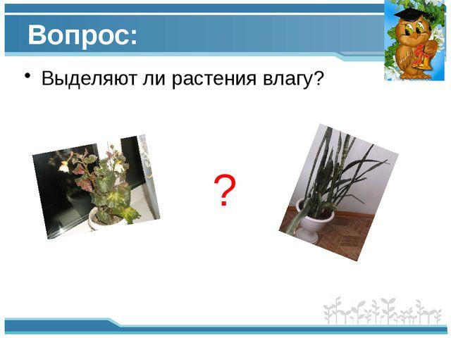 Вопрос: Выделяют ли растения влагу? ?