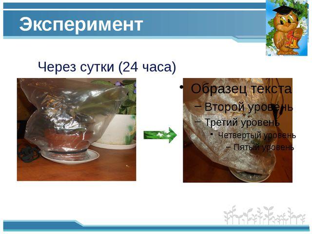 Эксперимент Через сутки (24 часа)