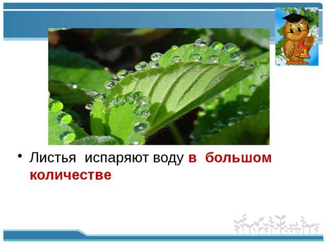 Листья испаряют воду в большом количестве