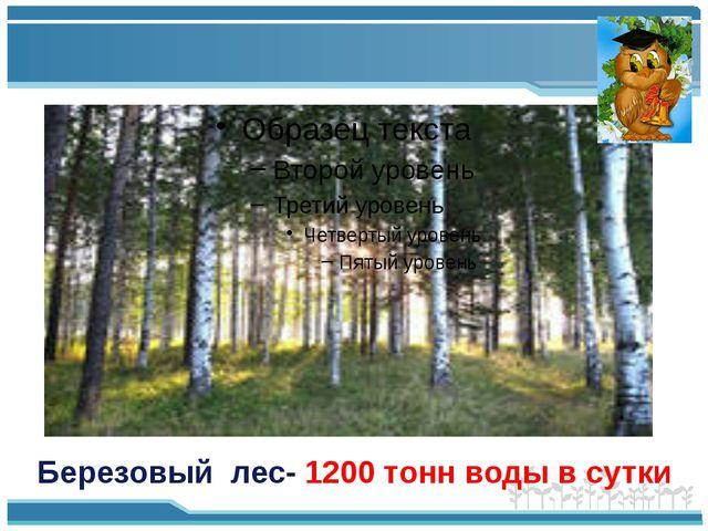 Березовый лес- 1200 тонн воды в сутки