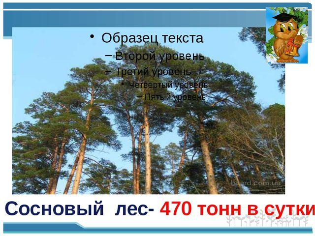 Сосновый лес- 470 тонн в сутки
