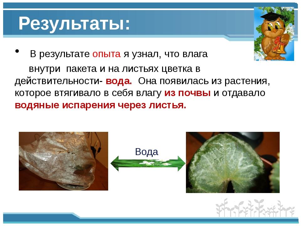 Результаты: В результате опыта я узнал, что влага внутри пакета и на листьях...