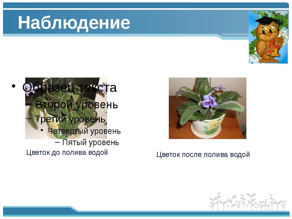Наблюдение Цветок до полива водой Цветок после полива водой