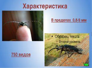 Характеристика В пределах 0,8-9 мм 750 видов