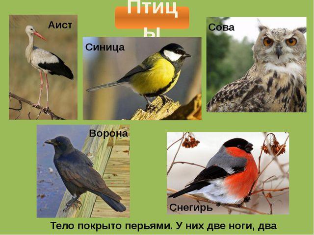 Птицы Тело покрыто перьями. У них две ноги, два крыла. Аист Синица Сова Ворон...