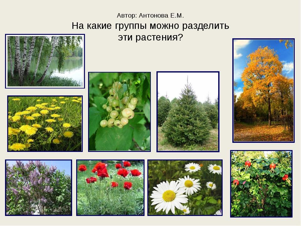 Автор: Антонова Е.М. На какие группы можно разделить эти растения?