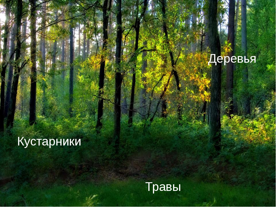 Деревья Кустарники Травы