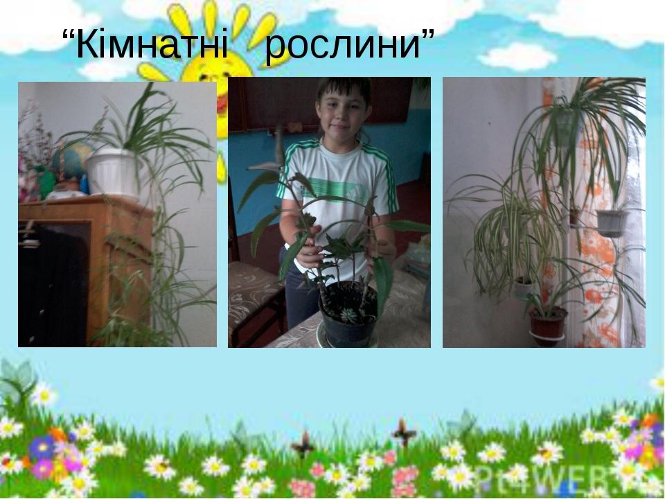 """""""Кімнатні рослини"""""""