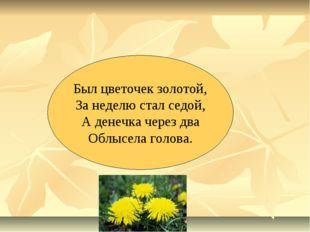 Был цветочек золотой, За неделю стал седой, А денечка через два Облысела голо
