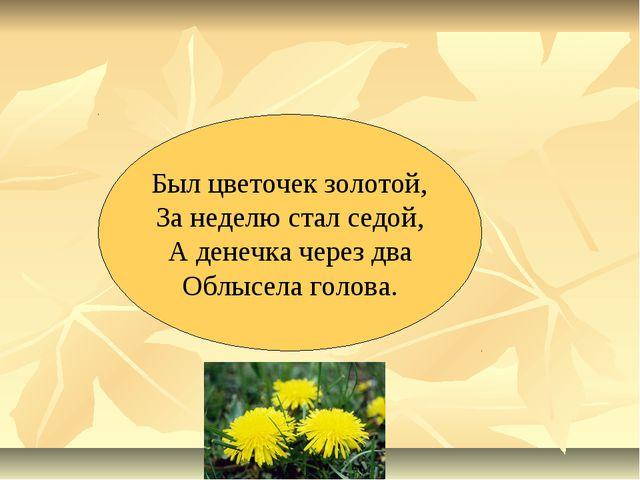 Был цветочек золотой, За неделю стал седой, А денечка через два Облысела голо...