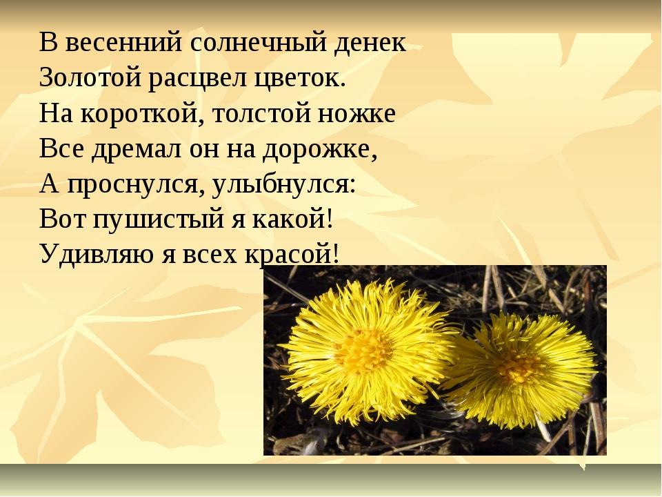 В весенний солнечный денек Золотой расцвел цветок. На короткой, толстой ножке...