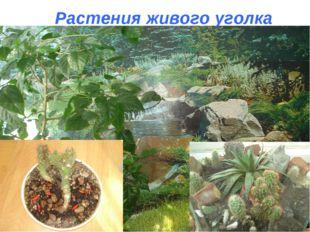 Растения живого уголка