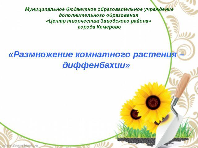 «Размножение комнатного растения – диффенбахии» Муниципальное бюджетное образ...
