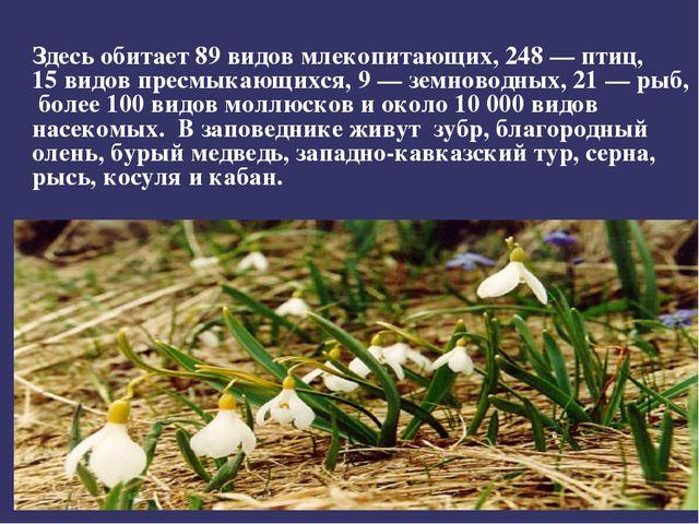 Здесь обитает 89видов млекопитающих, 248 — птиц, 15видов пресмыкающихся, 9...