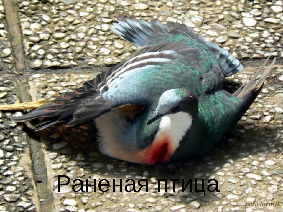 Раненая птица