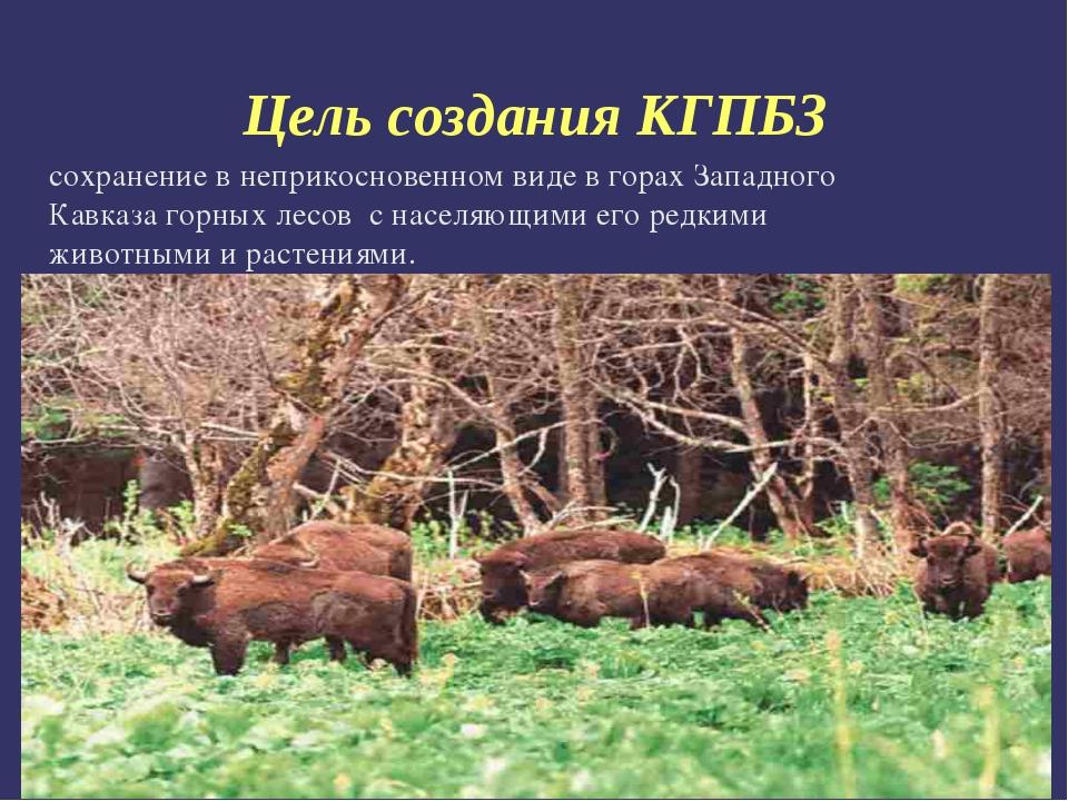 Цель создания КГПБЗ сохранение в неприкосновенном виде в горах Западного Кавк...