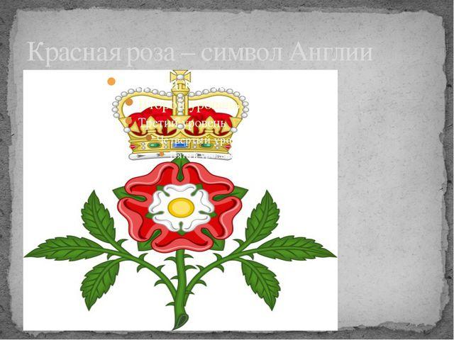 Красная роза – символ Англии