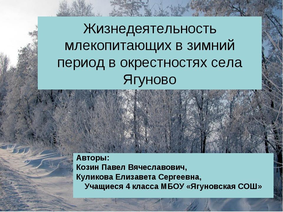 Жизнедеятельность млекопитающих в зимний период в окрестностях села Ягуново А...