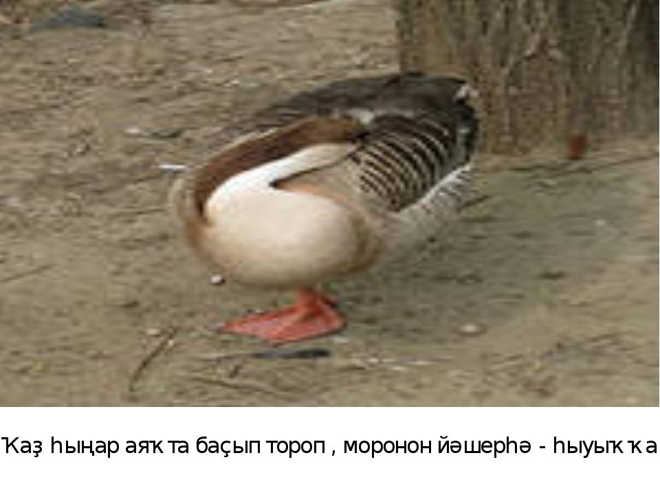 Ҡаҙ һыңар аяҡта баҫып тороп , моронон йәшерһә - һыуыҡҡа