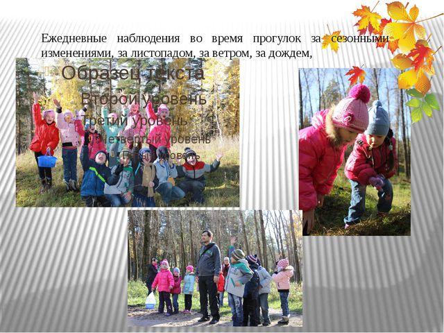 Ежедневные наблюдения во время прогулок за сезонными изменениями, за листопа...