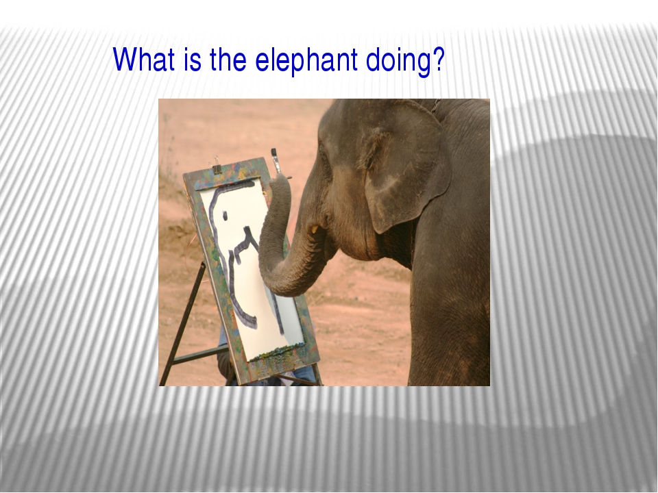 What is the elephant doing?