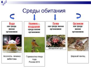 Среды обитания Вода как среда жизни организмов: Аксолотль -личинка амбистомы