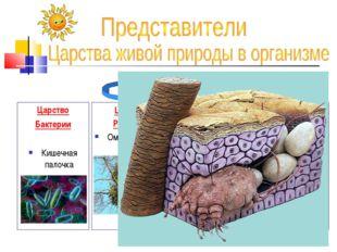 Царство Бактерии Кишечная палочка Царство Грибы Царство Растения Омела белая