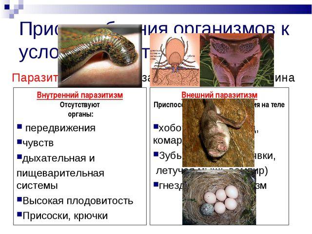 Приспособления организмов к условиям обитания Паразитизм – питание за счет ор...