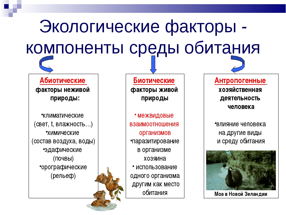 Экологические факторы - компоненты среды обитания Абиотические факторы неживо...