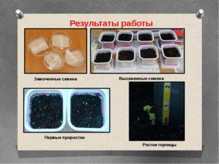 Результаты работы Замоченные семена Высаженные семена Первые проростки Ростки