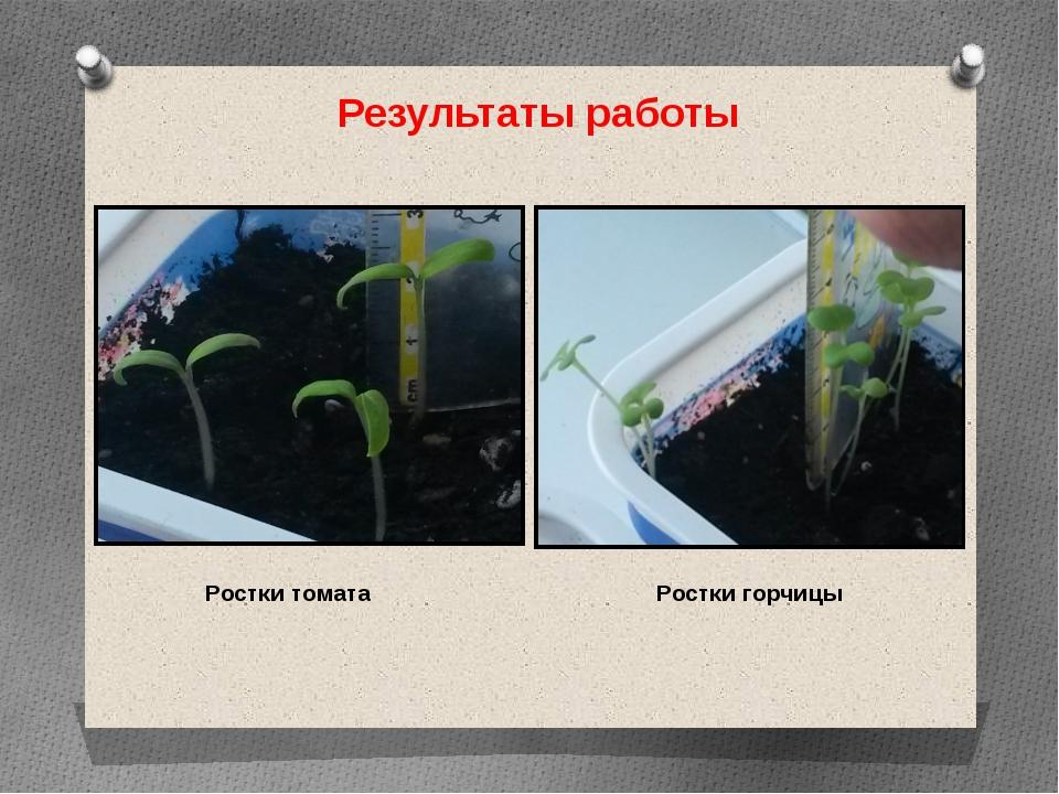 Результаты работы Ростки томата Ростки горчицы
