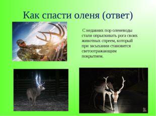 Как спасти оленя (ответ) С недавних пор оленеводы стали опрыскивать рога свои