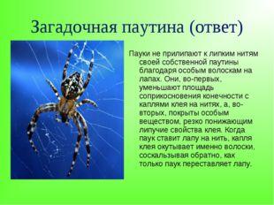 Загадочная паутина (ответ) Пауки не прилипают к липким нитям своей собственно