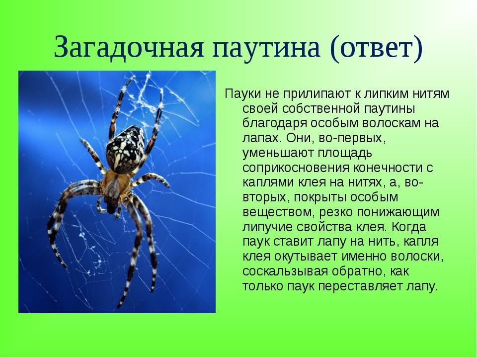 Загадочная паутина (ответ) Пауки не прилипают к липким нитям своей собственно...