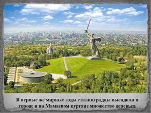 В первые же мирные годы сталинградцы высадили в городе и на Мамаевом кургане