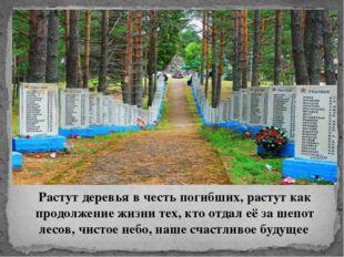 Растут деревья в честь погибших, растут как продолжение жизни тех, кто отдал