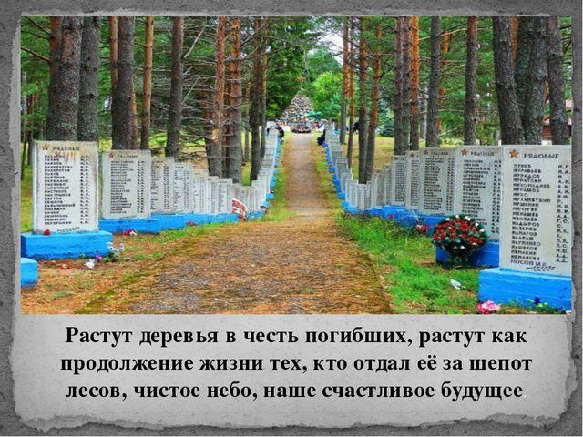 Растут деревья в честь погибших, растут как продолжение жизни тех, кто отдал...
