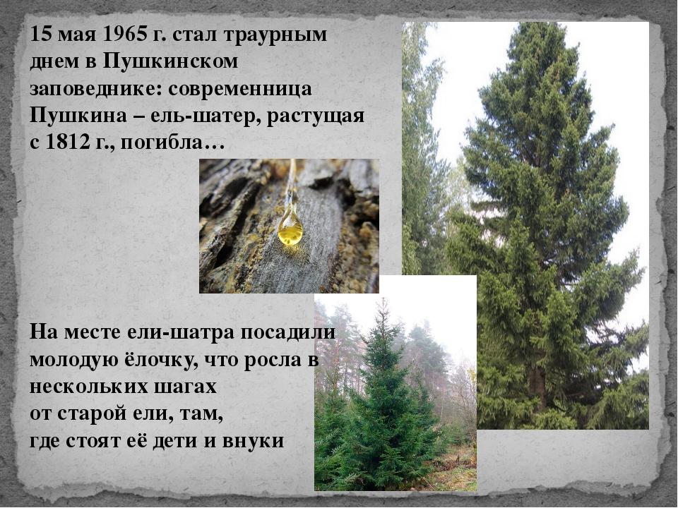 15 мая 1965 г. стал траурным днем в Пушкинском заповеднике: современница Пушк...