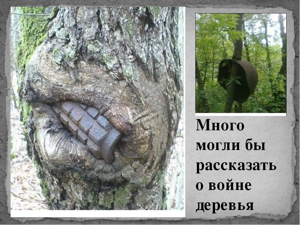 Много могли бы рассказать о войне деревья
