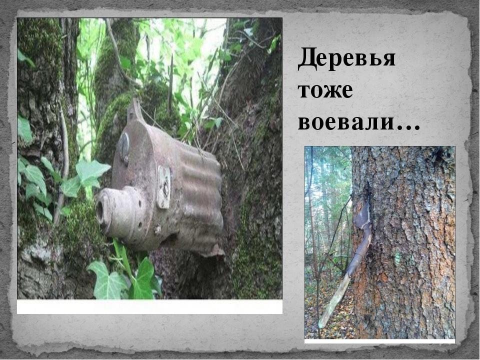 Деревья тоже воевали…