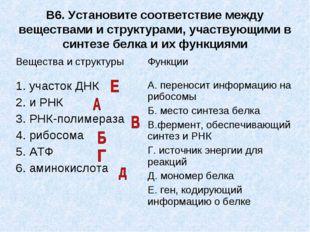 В6. Установите соответствие между веществами и структурами, участвующими в си