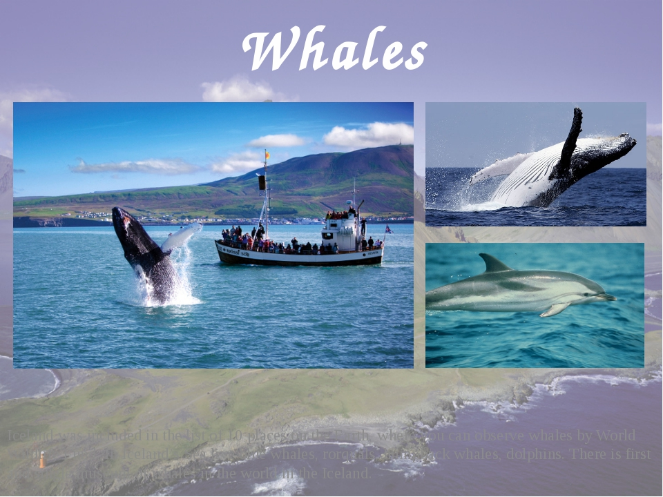 Whales Iceland was included in the list of 10 places on the Earth, where you...