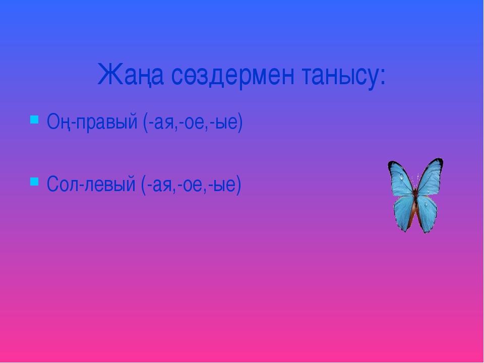 Жаңа сөздермен танысу: Оң-правый (-ая,-ое,-ые) Сол-левый (-ая,-ое,-ые)