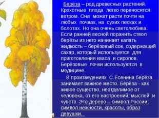 Берёза – род древесных растений. Крохотные плода легко переносятся ветром. О